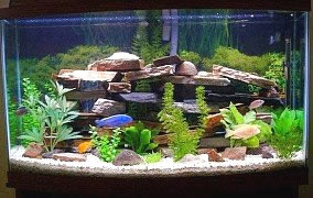 Polishing fish tanks